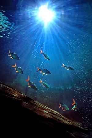 onder water Stockfoto