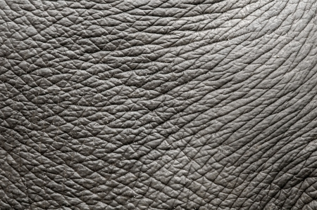 elephant skin Stock Photo - 8253589