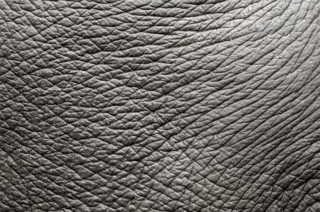 elefante: piel de elefante
