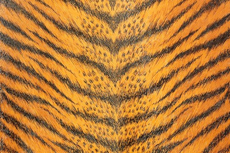 artificial tiger skin photo
