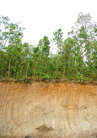 soil sectin Stock Photo