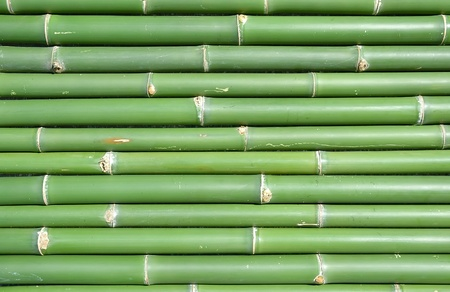 bamboo Stock Photo - 8542574