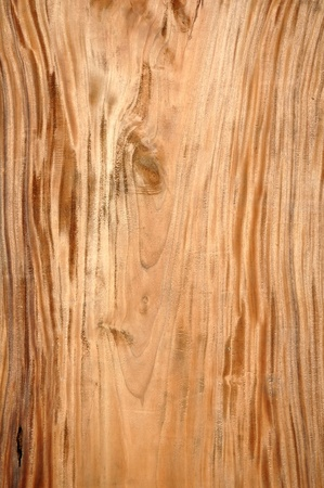 texture of wood Stock Photo - 8764036