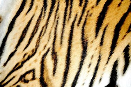 tiger skin photo