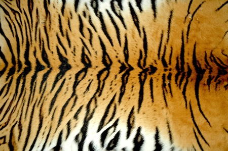 tijger huid Stockfoto