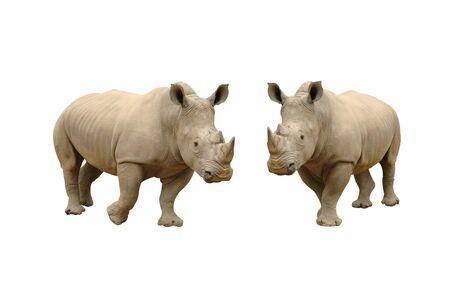 animals horned: rhinoceros isolated Stock Photo