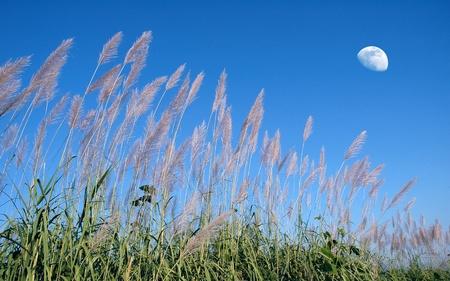 wild grass: hierba silvestre bello y cielo azul Foto de archivo