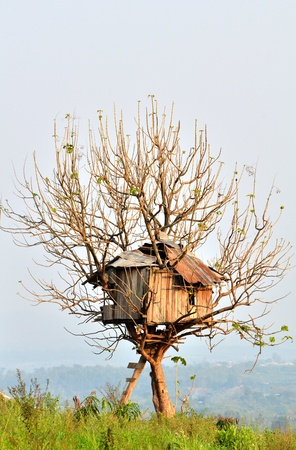old house built on a tree.