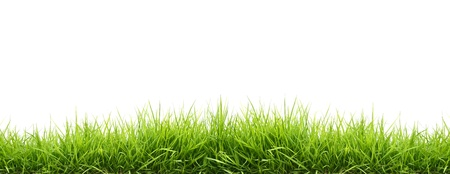 fresh spring green grass isolated on white background Stock Photo