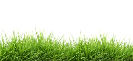 fresh spring green grass isolated on white background Stock Photo - 9529519