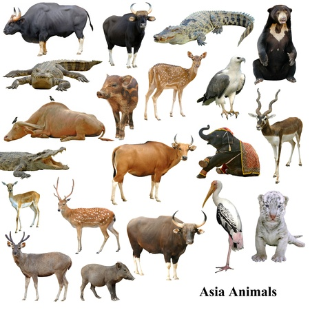 asian animals collection isolated on white background photo