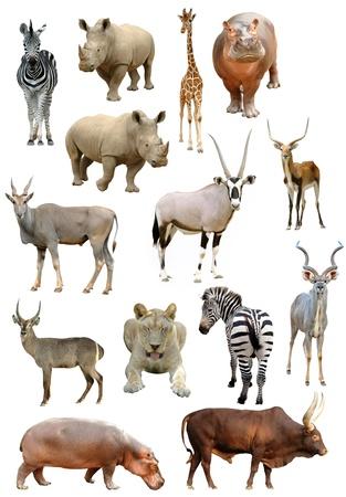 nashorn: afrikakarte Animals Collection isolated on white background