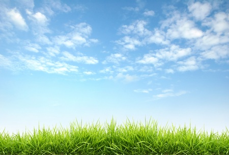 blue sky: fresh spring grass with blue sky