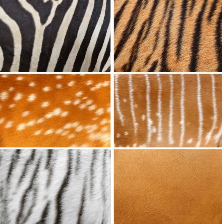 6 collection of animal skin photo