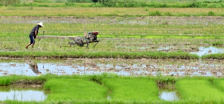 farmer preparing the ground for the growth of rice Stock Photo - 10203185