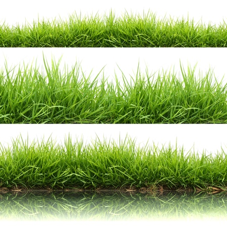3 style fresh spring green grass isolated on white background