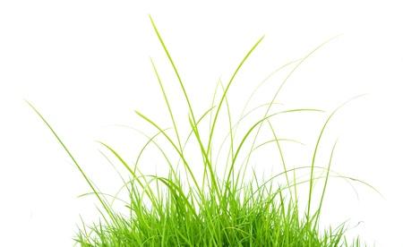fresh spring green grass isolated on white background  Standard-Bild