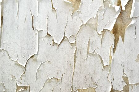 crackles: abstract of old paint peeling wall