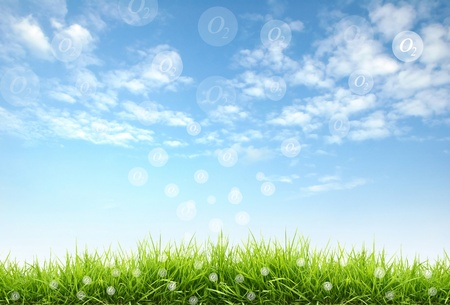 land: fresh spring grass with blue sky