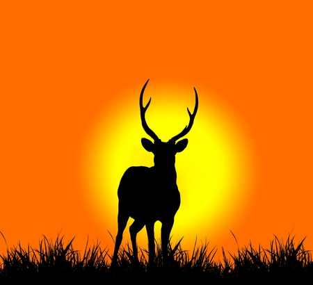 silhouette of deer with sunset  photo