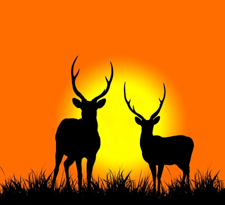 silhouette of deer with sunset  Stock Photo
