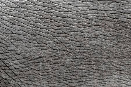 piel morena: esta es la textura de la piel de elefante real