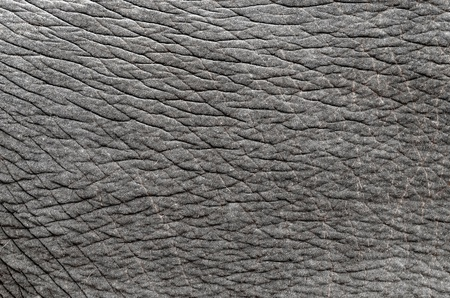 this is  texture of real elephant skin Stock Photo