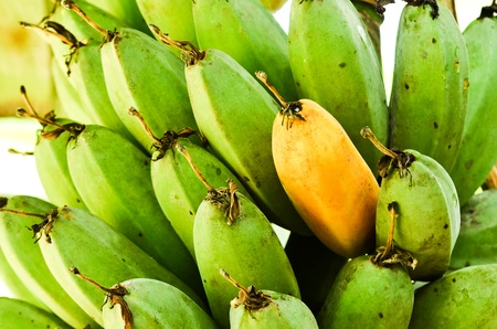 ripening: fresh ripe and green banana Stock Photo
