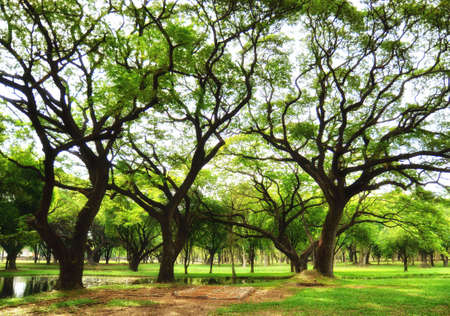 summer trees: Trees and green grass on a bright summer day