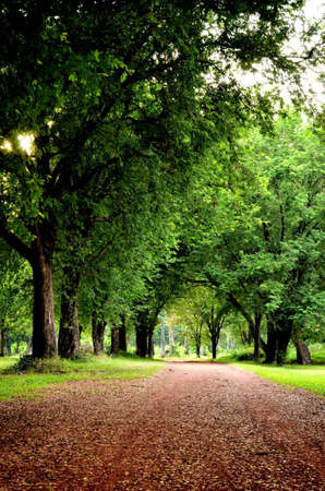 road in a garden with tree and green grass photo