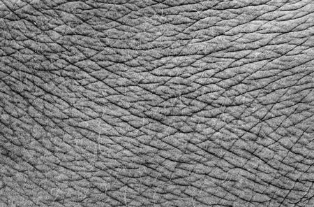 human skin texture: textured of asia elephant skin Stock Photo