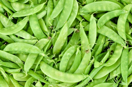 close up of fresh sugar pea Stock Photo - 25246224