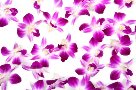 beautiful blooming orchid isolated on white background photo