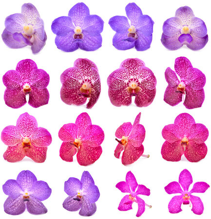 tropical flowers: beautiful blooming orchid isolated on white background