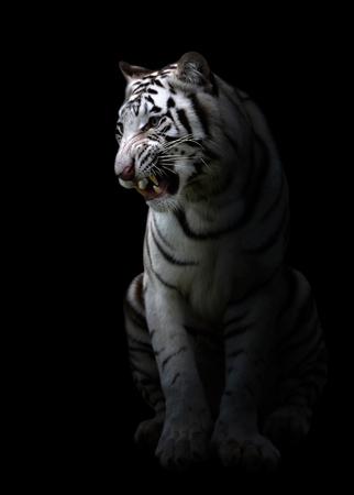 white bengal tiger in the dark night photo