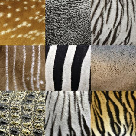 textured of an animals skin photo