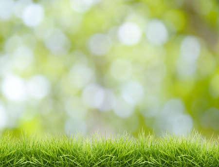 defocus: fresh green grass with defocus background