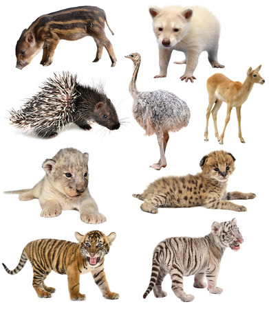baby animals collection isolated on white background