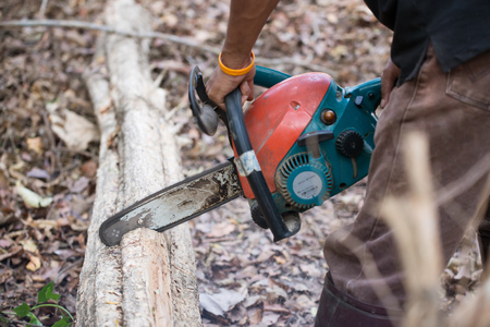 lumber industry: man cutting the log of wood with chainsaw