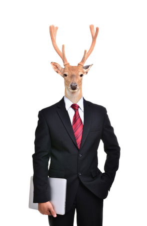 working animal: business man with deer head isolated on white background Stock Photo