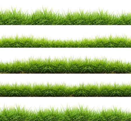fresh spring green grass isolated on white background Фото со стока