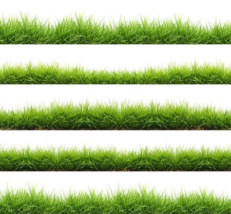 medio ambiente: la hierba verde fresca de primavera aisladas sobre fondo blanco Foto de archivo