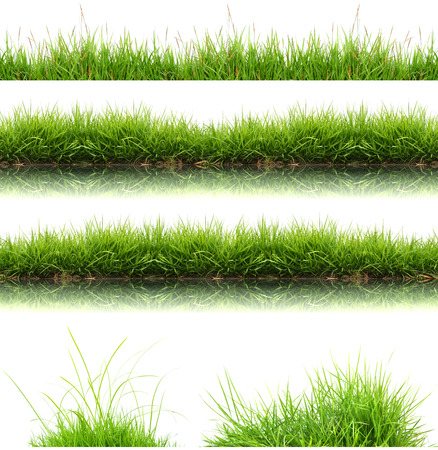 green and white: fresh spring green grass isolated on white background Stock Photo