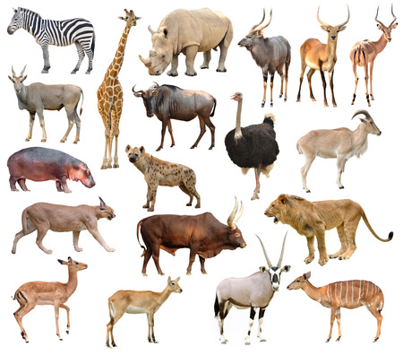 collection of africa animals isolated on white background Stock fotó