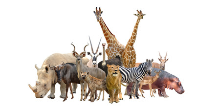 group of africa animals isolated on white background Banco de Imagens