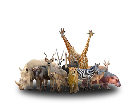 group of africa animals  on white background