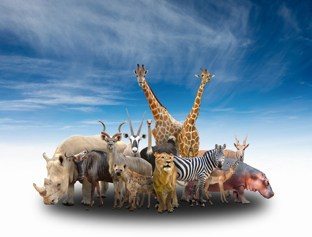 group of africa animals with blue sky Banque d'images