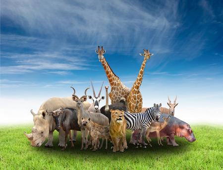 groupe de afrique animaux avec de l'herbe verte et de ciel bleu