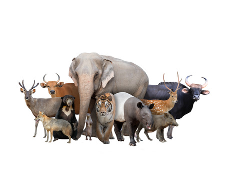 group of asia animals isolated on white background photo