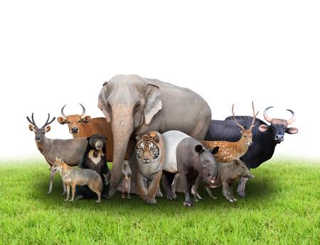 groupe d'animaux asie avec de l'herbe verte fraîche sur fond blanc